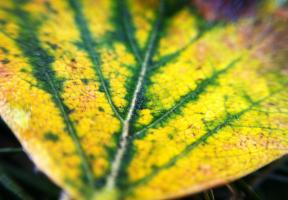 olloclip: Leaf - Macro